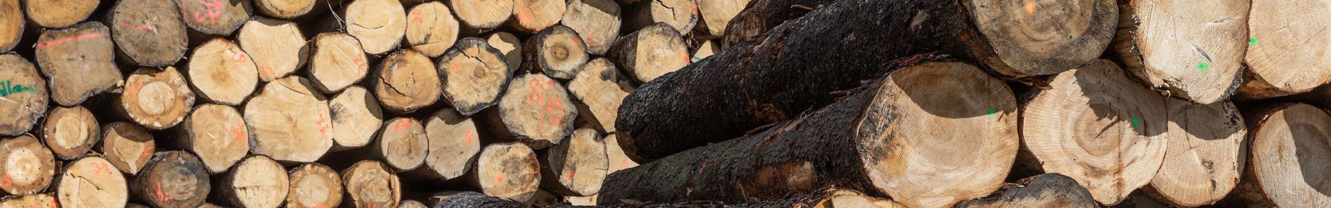 Anwendungsgebiet Holzbau Informationen